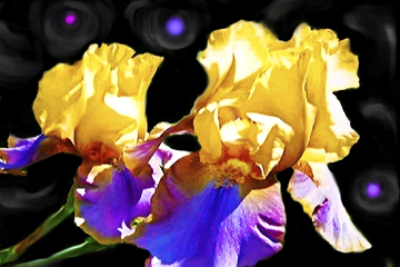 """Iris"" iPhone painting by KathyClem ©2010"